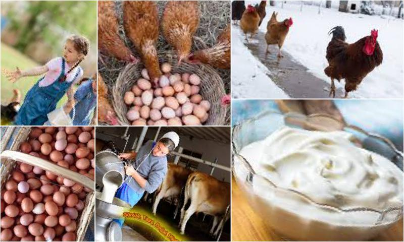 Organik Sütün Diğer Sütlerden Farkı Nedir?