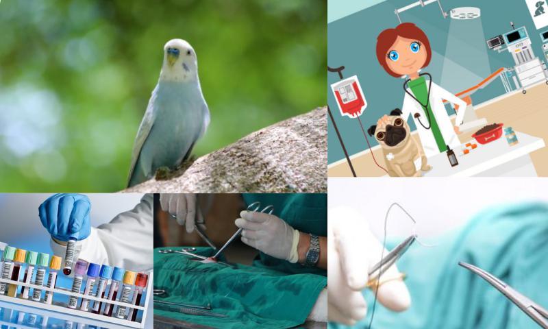 Veteriner Klinik Programı Nasıl Yapılır?