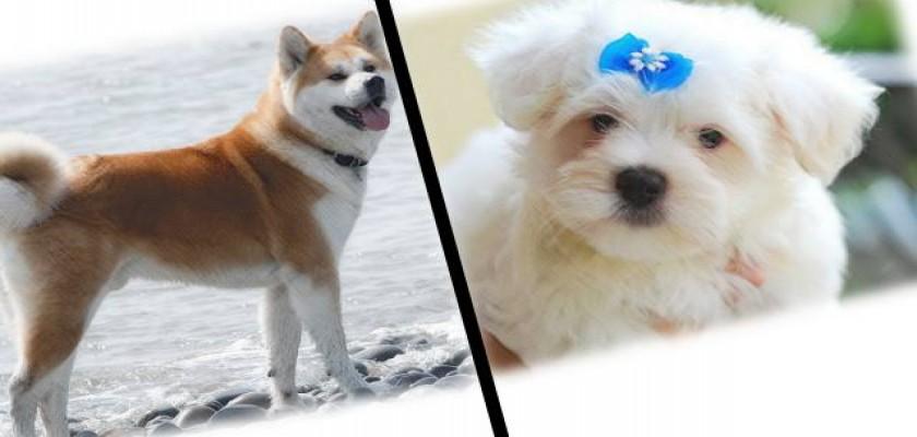 Köpek Mamalarında Tazeliğinin Önemi